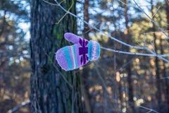 Mitten на дереве Стоковое Изображение