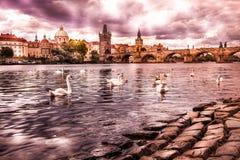 Mitten av Prague, flod- och vitsvanar royaltyfria bilder