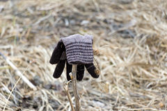 Mitten brown color from the wool and dry herb. In mitten stuck t Royalty Free Stock Photo