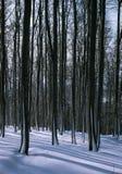 Mitten in den schneebedeckten Bäumen Stockfotografie