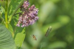 Mitten- in der Lufthonigbiene Lizenzfreie Stockfotografie