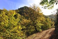 Mitten in Herbst lizenzfreie stockfotos