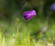 Mitten in Natur Blumengarten und bunten Blumen Lizenzfreie Stockfotos