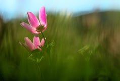 Mitten in Natur Blumengarten und bunten Blumen Stockbilder