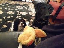 Mittens и жасмин Стоковая Фотография RF