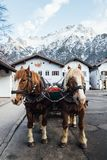 MITTENWALD, GERMANY - DECEMBER 2018: A couple of horses standing in old town street with Alps on background stock photo