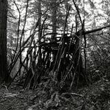 Mitternachtskabine im Wald lizenzfreie stockfotos