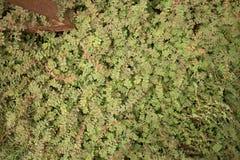 Mittlere obenliegende Ansicht der grünen Bodenhöhevegetation mit dem bloßen erdigen Flecken sichtbar Stockfotos