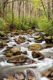 Mittleres Saluda-Fluss-Forellen-Strom im Hinterland Sc Lizenzfreie Stockbilder