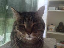 Mitzvah η γάτα Στοκ εικόνες με δικαίωμα ελεύθερης χρήσης