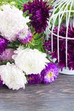 Mix of aster flowers Royalty Free Stock Photography