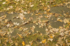 Mix of autumn leaves, grass, concrete walk in park Stock Images