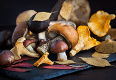 Mix of autumn wild forest edible mushrooms Royalty Free Stock Image