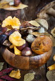 Mix of autumn wild forest edible mushrooms Royalty Free Stock Images