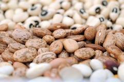 Mix bean Stock Image