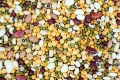 Mix bean Royalty Free Stock Photos