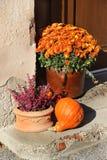 Mix of  beautiful fall terrace flowers Stock Image