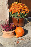 Mix of  beautiful fall terrace flowers Royalty Free Stock Images
