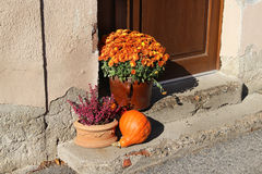 Mix of  beautiful fall terrace flowers Stock Images