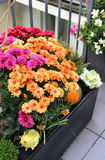 Mix of  beautiful flowers in the fall terrace garden Royalty Free Stock Images