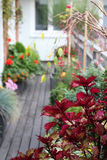 Mix of  beautiful flowers in the fall terrace garden Stock Images