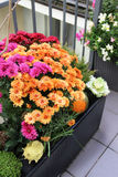 Mix of beautiful flowers in the fall terrace garden. Mix of beautiful vivid terrace fall flowers and pumpkin stock photos
