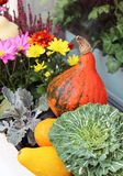 Mix of beautiful flowers in the fall terrace garden. Mix of beautiful vivid terrace fall flowers and pumpkin royalty free stock photos