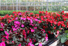 Big mix of vivid flowers. Mix of beautiful flowers in the greenhouse Stock Images