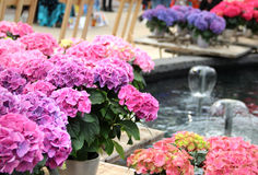 Mix of beautiful flowers on the terrace. Mix of beautiful flowers on the spring terrace Royalty Free Stock Image