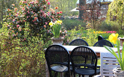 Mix of beautiful flowers on the terrace. Mix of beautiful flowers on the spring terrace Stock Image