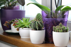 Mix of beautiful houseplants Royalty Free Stock Images