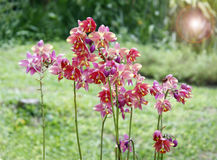 Mix of beautiful orchids Royalty Free Stock Photos
