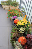 Mix of beautiful vivid terrace fall flowers and pumpkin. Mix of beautiful fall decorations on the terrace garden stock images