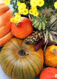 Mix of beautiful vivid terrace fall flowers and pumpkin Stock Photography