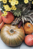 Mix of beautiful vivid terrace fall flowers and pumpkin. Mix of beautiful fall decorations on the terrace garden royalty free stock image