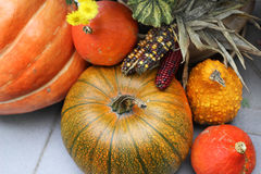 Mix of beautiful vivid terrace fall flowers and pumpkin Royalty Free Stock Images