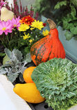 Mix of beautiful vivid terrace fall flowers and pumpkin Stock Photography