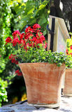 Mix of  beautiful vivid terrace flowers Stock Photography