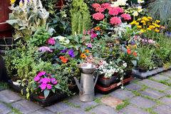 Mix of  beautiful vivid terrace flowers Royalty Free Stock Photo