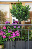 Mix of  beautiful vivid terrace flowers Royalty Free Stock Photography