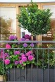 Mix of  beautiful vivid terrace flowers. Mix of  beautiful vivid terrace summer flowers Royalty Free Stock Photography