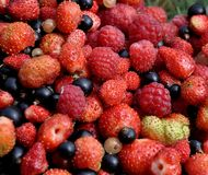 Mix of Berries Royalty Free Stock Photos