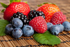 Mix of Berries. A collection of berries on a table Stock Images