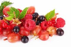 Mix berries Stock Image