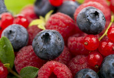 Mix of berries - raspberry, bilberry and red. Currant. See my other works in portfolio Stock Photo