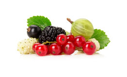 Mix of berries on the white background Stock Image