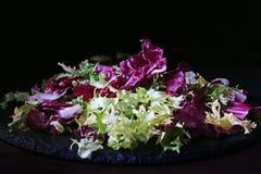 Mix of bitter-leafed vegetables, endive, radicchio, frisee and escarole leaf chicory salad. Over black slate platter Cichorium endivia royalty free stock images