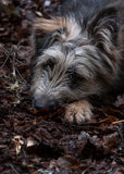 Mix breed lonely dog on the ground Royalty Free Stock Photography