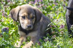 Mix breed puppy among the field flowers. Mix breed puppy among the grass leaves and colorful field flowers Royalty Free Stock Photography