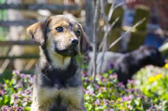 Mix breed puppy among the field flowers. Mix breed puppy among the grass leaves and colorful field flowers Royalty Free Stock Photo